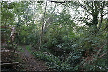 TQ1472 : Path by the River Crane, Twickenham by David Howard