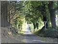 N5369 : Tree-lined road at Ankerland by Oliver Dixon