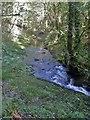 SX5083 : Lydford Gorge [35] by Michael Dibb