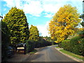 TQ5254 : Autumn colour in Sevenoaks by Malc McDonald