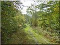 TR0960 : Bridleway in Blean Woods by Robin Webster