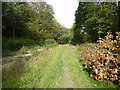 TR0860 : Path in Blean Woods by Robin Webster
