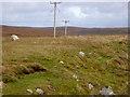 HU4790 : Telegraph Poles across the Moor by David Dixon