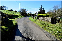 H5574 : Small bridge along Merchantstown Road by Kenneth  Allen