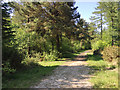 SX8980 : A ride in Haldon Forest west of Ashcombe Cross by Robin Stott