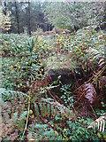 SJ9917 : Rugeley (Penkridge Bank) Camp - '1 Lines' - Bath House (looking S) by John M