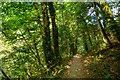 SX5083 : West Devon : Lydford Gorge - Woodland Path by Lewis Clarke