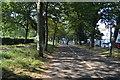 TQ3105 : Path, The Level by N Chadwick