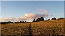 SE2526 : Footpath through the farm fields by I Love Colour