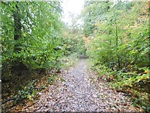 SO5812 : Coleford, footpath by Mike Faherty
