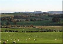 NU0112 : Pastures near Great Ryle by Gordon Hatton