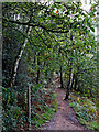 SO8282 : Woodland track on Kinver Edge in Staffordshire by Roger  Kidd