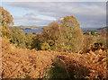NH5945 : Bracken and birch, Cnoc a' Chinn by Craig Wallace