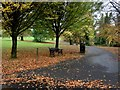 H4572 : Fallen leaves, McCauley Park, Omagh by Kenneth  Allen