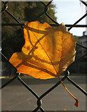 SX9164 : Leaf, Upton Park, Torquay by Derek Harper
