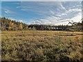 NH4955 : Bog in Moy wood by valenta