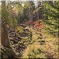 NH4955 : Path in Moy Wood by valenta