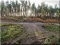 NH4955 : Moy Wood by valenta