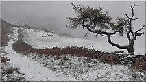 NZ5812 : First snow of the winter by Mick Garratt
