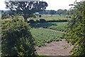 SJ3726 : Potato field, Haughton by Richard Webb