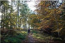NH5966 : Main perimeter track of Evanton Community Wood by Julian Paren