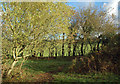 NS3629 : Scrubby Woodland Near Monkton by Mary and Angus Hogg