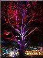 SK3386 : Illuminated tree in the Botanical Gardens : Week 44