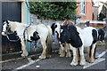 N0896 : Cobs at the annual Mohill horse fair by Des Colhoun