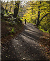 J4681 : Path, Crawfordsburn Glen by Rossographer