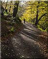 J4681 : Path, Crawfordsburn Glen : Week 45