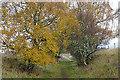 NJ0326 : Speyside Way by Anne Burgess