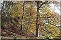 NJ0050 : Escarpment beside the River Findhorn at Logie : Week 45