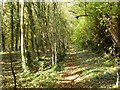 SK4946 : Woodland walk near Watnall by Alan Murray-Rust