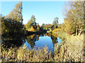 SU9883 : Pond in Sefton Park by Des Blenkinsopp
