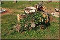 SX9065 : Tree stump, Torquay Cemetery by Derek Harper
