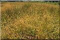 SX9066 : Grass, Nightingale Park by Derek Harper