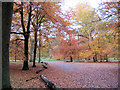SP9712 : Autumn colours on a side-turning off the avenue, Ashridge by Chris Reynolds