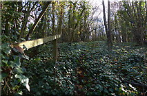 SK5802 : Woodland in Freemen's Common, Leicester by Mat Fascione