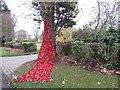NZ3063 : Weeping Tree, Hebburn Cemetery by Les Hull
