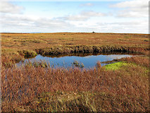 NY7837 : Small lake on the summit plateau of Burnhope Seat (2) by Mike Quinn