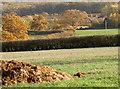 ST7641 : A pheasant prospects by Neil Owen