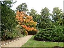 TL4458 : The Scholars' Garden, St John's College, Cambridge by David Smith