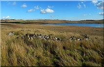 NS2472 : A circular sheep ree by Lairich Rig
