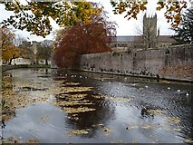 ST5545 : Moat and wall of Wells Bishop's Palace by Philip Halling