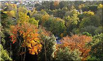 SX9065 : Autumnal colour in Chapel Hill Pleasure Grounds by Derek Harper