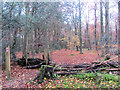 SP8908 : The Path on the Boundary of Hengrove Wood by Chris Reynolds