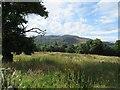 NH4140 : Field, Erchless Castle by Richard Webb