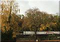 SX9165 : Autumnal trees, Lymington Road, Torquay by Derek Harper