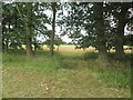 SE7435 : Footpath  through  windbreak  trees  and  dry  ditch by Martin Dawes