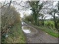 ST4452 : Labourham Drove, near Cheddar by David Smith